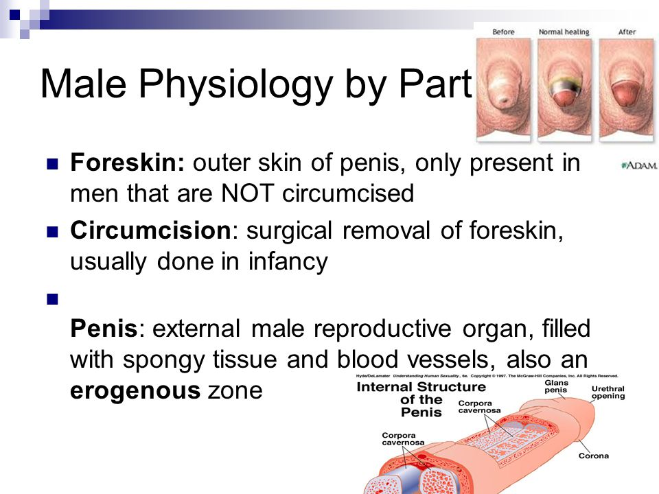 Physiology of multiple orgasm 15