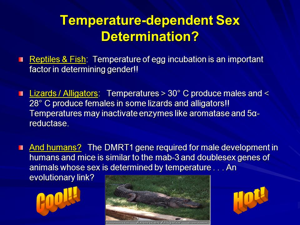 girls-huge-temperature-sex-fat