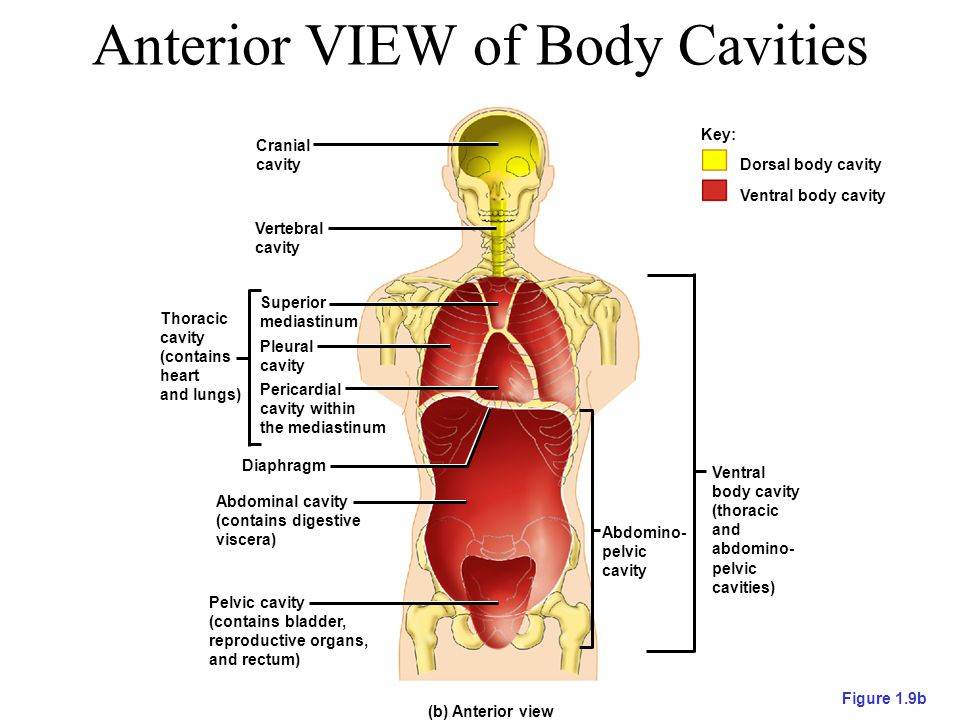 Introduction To Anatomical Directions And Orientation Ppt Video