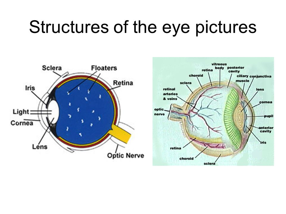 Structures of the eye pictures