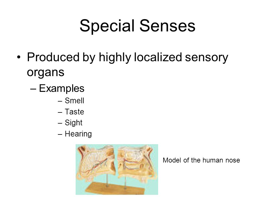 Special Senses Produced by highly localized sensory organs Examples