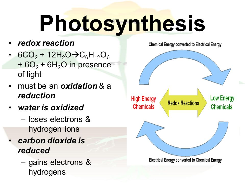 Photosynthesis ppt download 15 photosynthesis redox reaction publicscrutiny Gallery