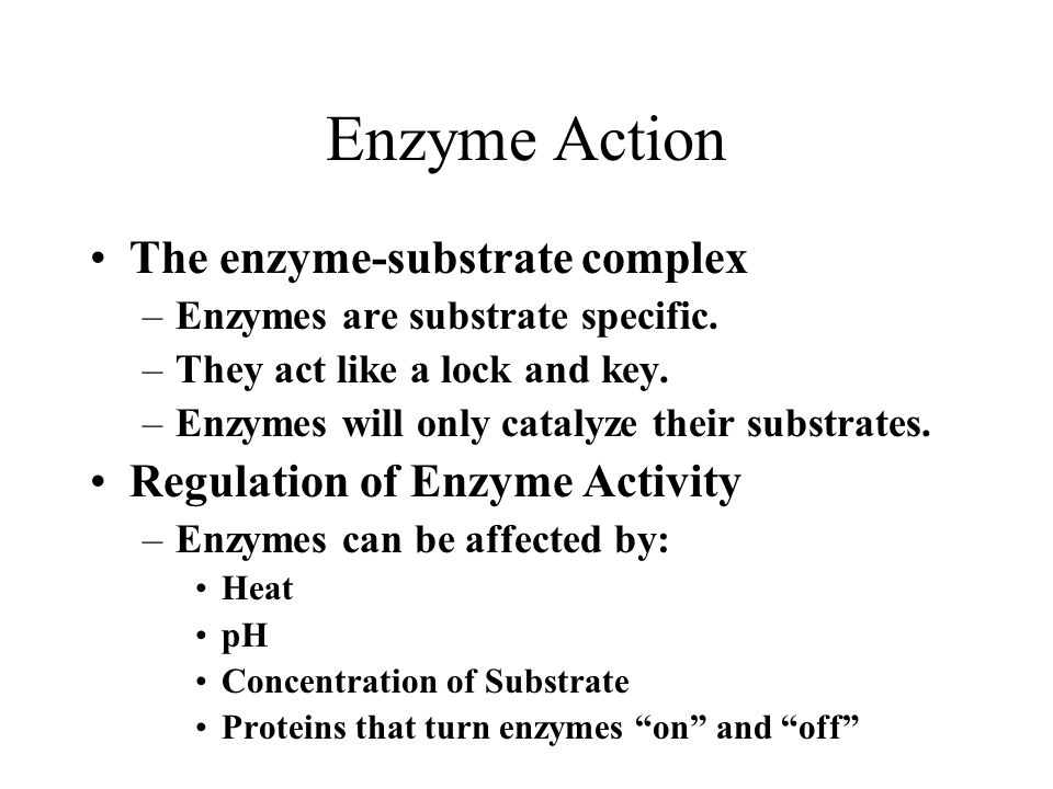 Enzyme Action The enzyme-substrate complex