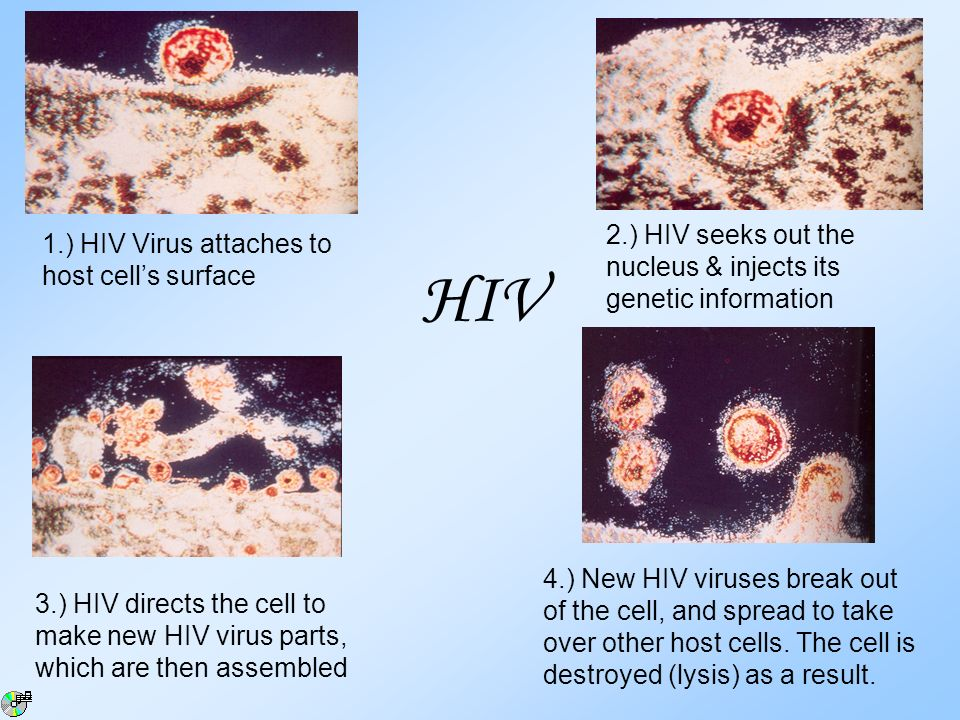 HIV 2.) HIV seeks out the nucleus & injects its genetic information