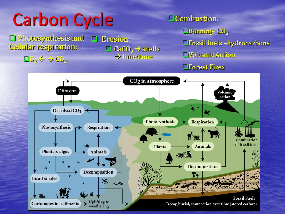 Carbon Cycle Combustion: Photosynthesis and Cellular respiration: