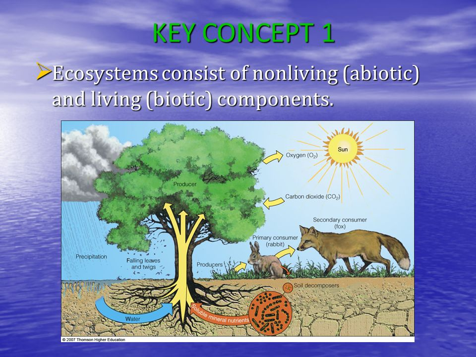 KEY CONCEPT 1 Ecosystems consist of nonliving (abiotic) and living (biotic) components.