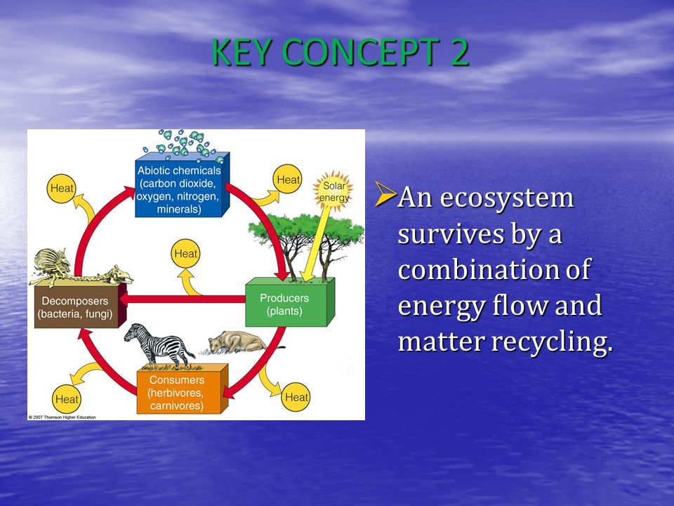 KEY CONCEPT 2 An ecosystem survives by a combination of energy flow and matter recycling.