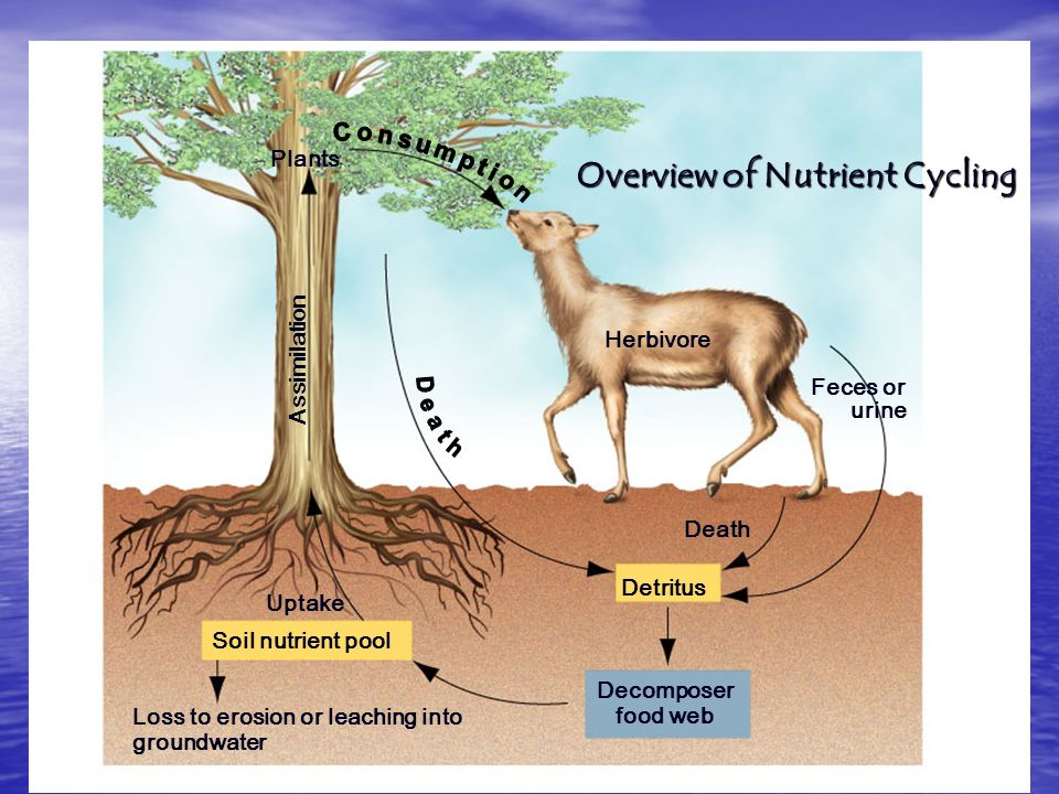 Overview of Nutrient Cycling