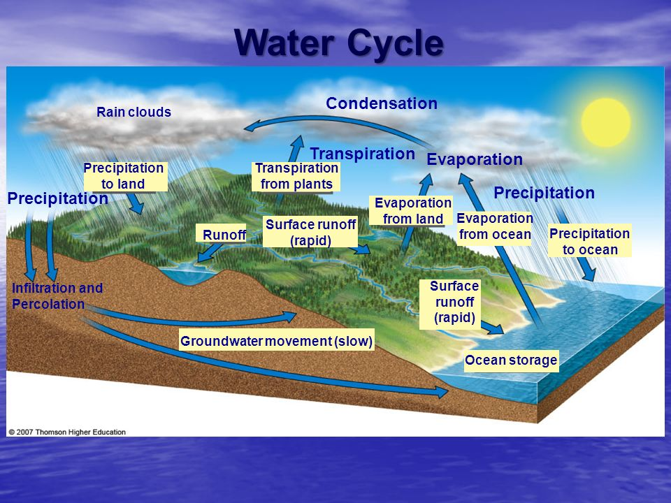 Water Cycle Condensation Transpiration Evaporation Precipitation