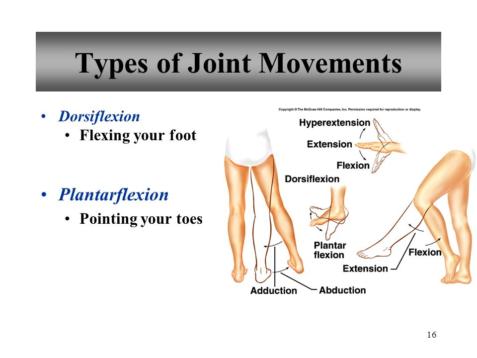 Chapter 8 Joints Of The Skeletal System Ppt Download