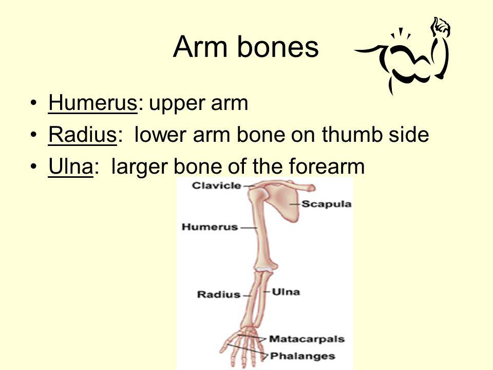 Skeletal System Principles Of Health Science Ppt Video Online Download