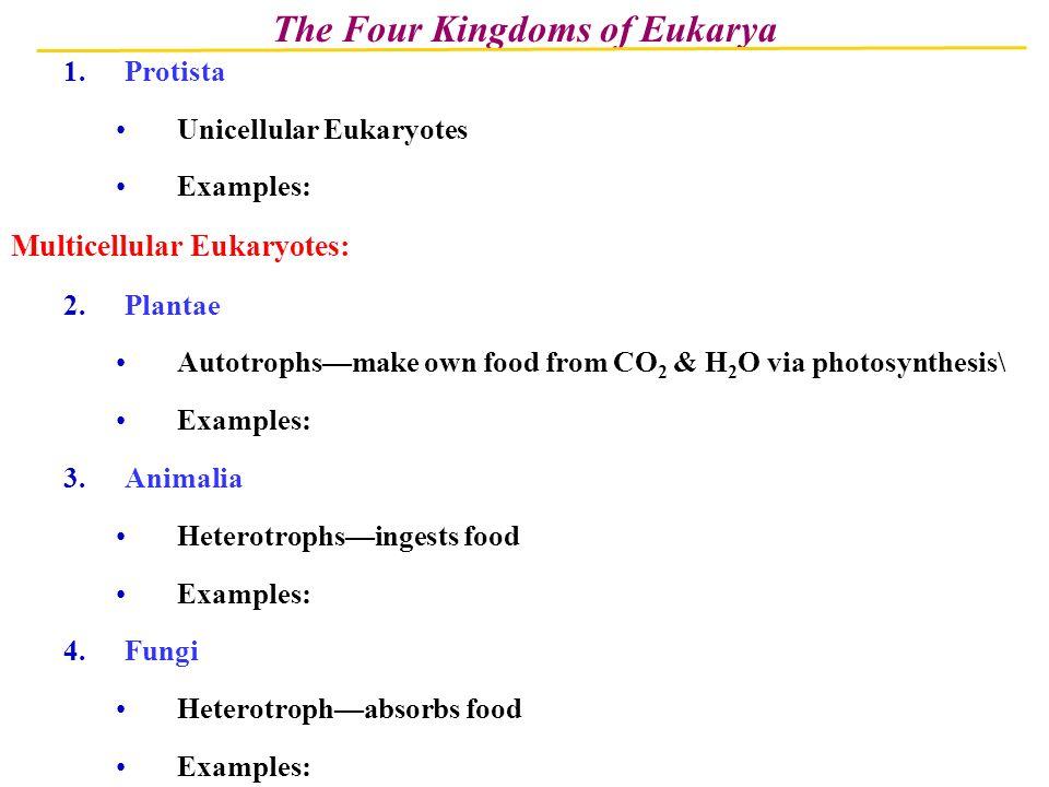 The Four Kingdoms Of Eukarya