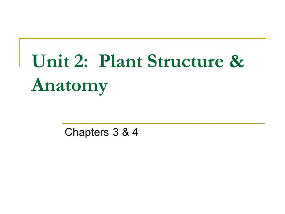 Unit 2: Plant Structure & Anatomy - ppt download