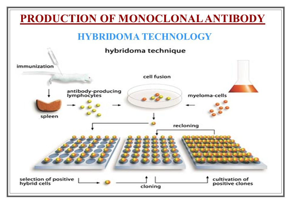 Hybridoma technology & its application in fisheries.