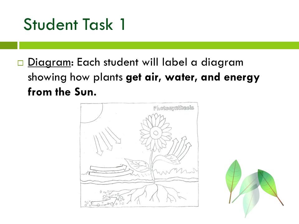 Photosynthesis jill turner ppt video online download 12 student task 1 diagram each student will label a diagram showing how plants get air water and energy from the sun ccuart Images