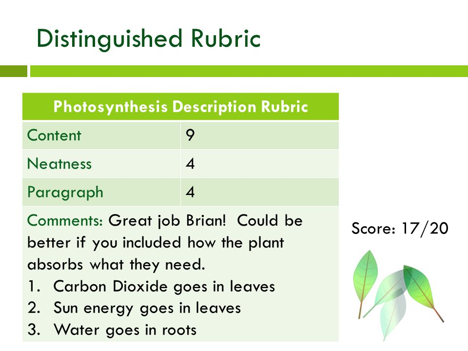 Photosynthesis Diagram Rubric All Kind Of Wiring Diagrams