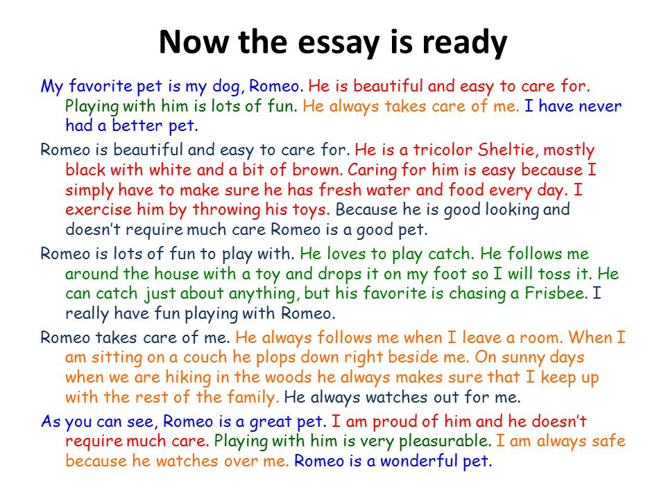 My favorite animal essay