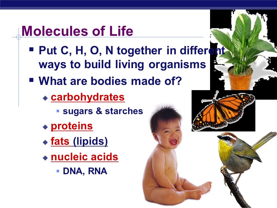Molecules of Life Put C, H, O, N together in different ways to build living organisms. What are bodies made of
