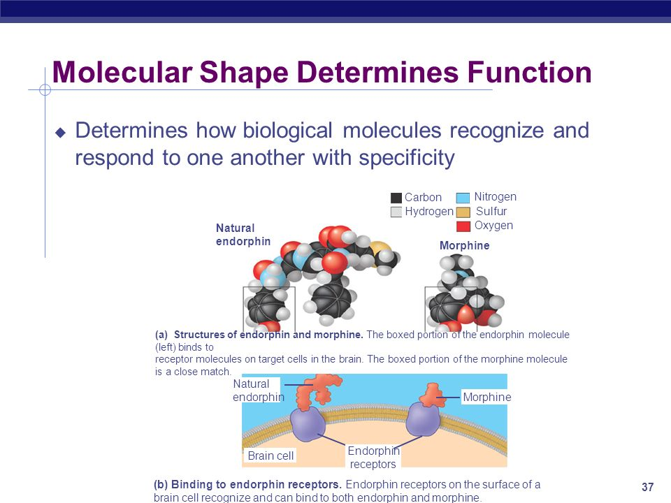 Molecular Shape Determines Function