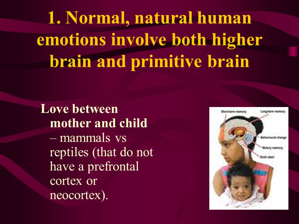 1. Normal, natural human emotions involve both higher brain and primitive brain