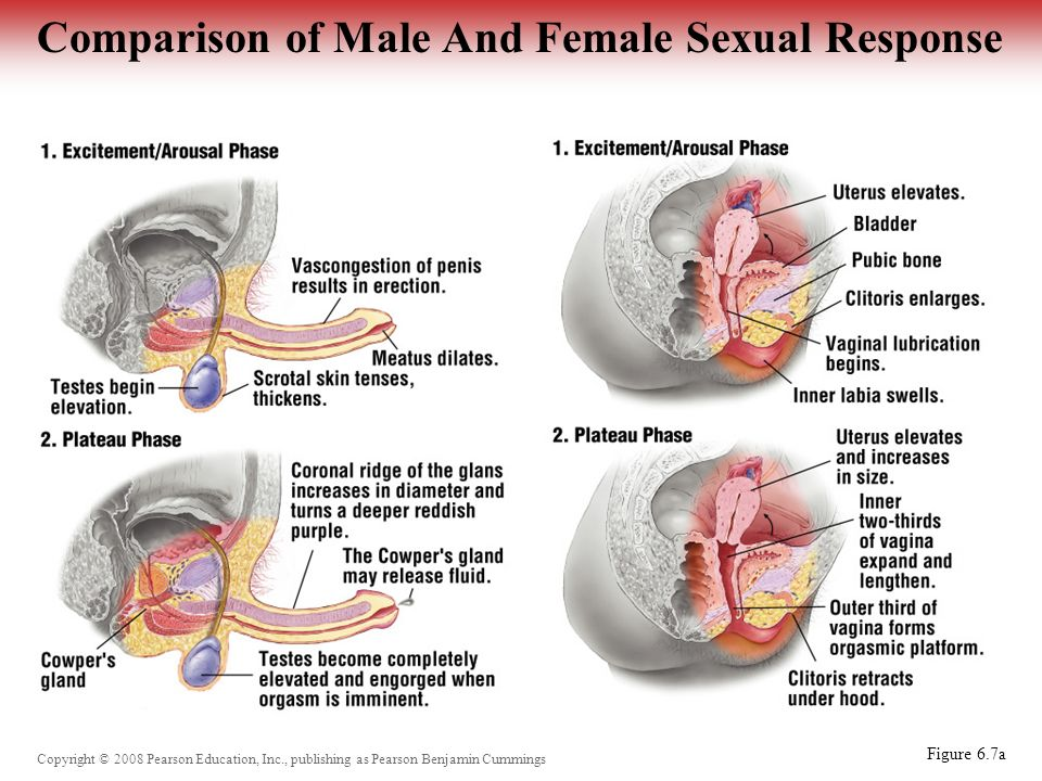Female sexual release