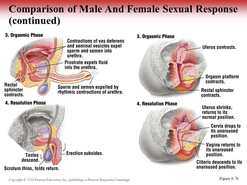 What are the different types of orgasms