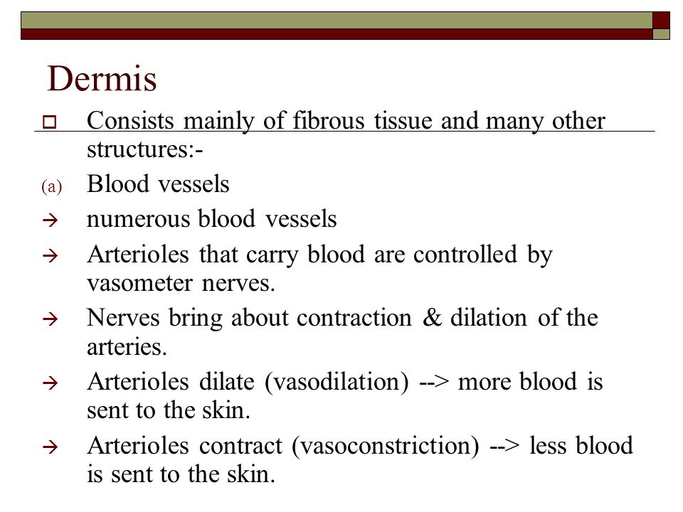 Dermis Consists mainly of fibrous tissue and many other structures:-