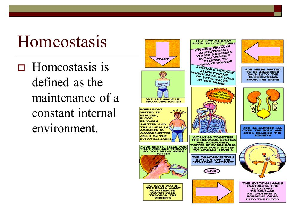 Homeostasis Homeostasis is defined as the maintenance of a constant internal environment.