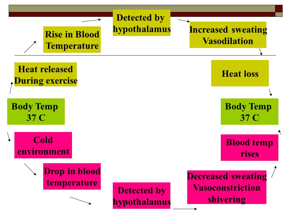 Detected by hypothalamus. Increased sweating. Vasodilation. Rise in Blood. Temperature. Heat loss.