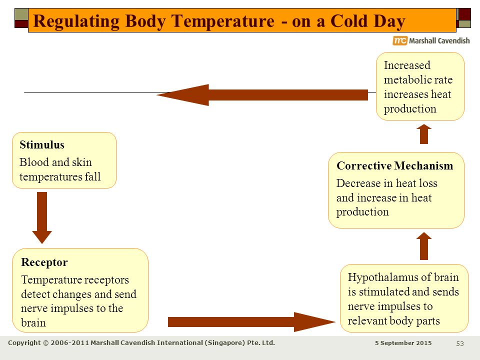 Regulating Body Temperature - on a Cold Day