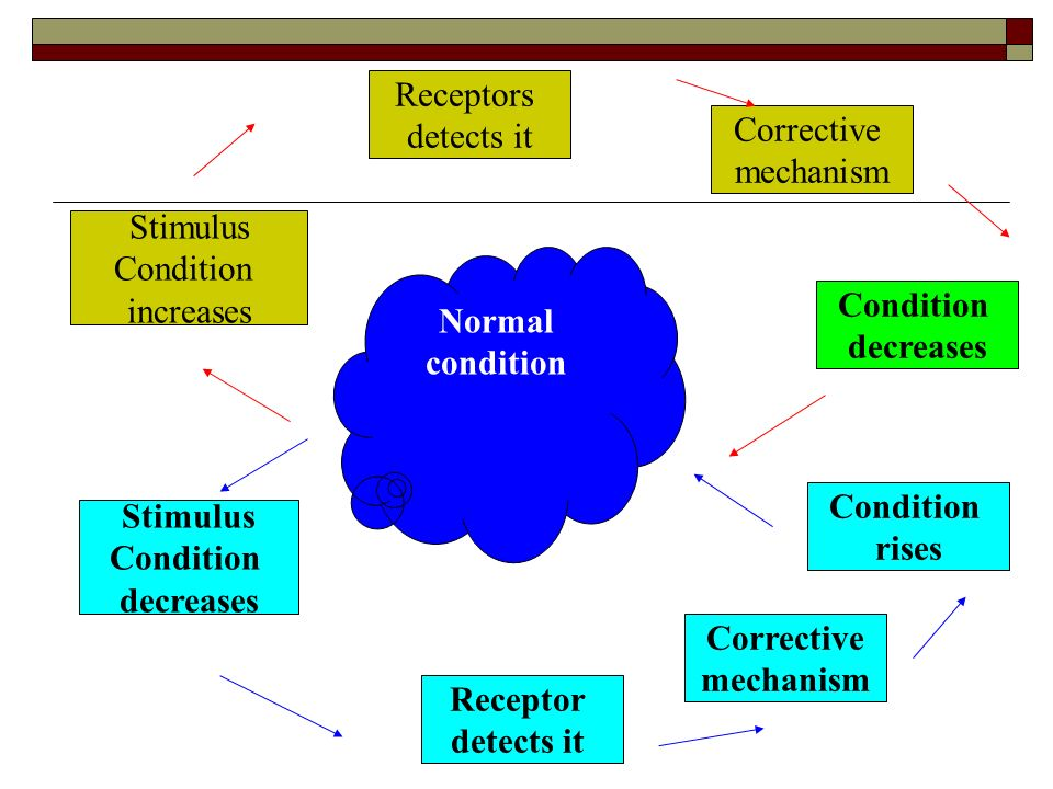 Receptors detects it. Corrective. mechanism. Stimulus. Condition. increases. Normal. condition.
