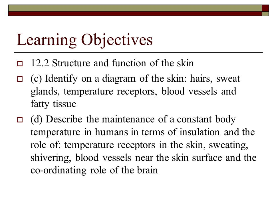 Learning Objectives 12.2 Structure and function of the skin