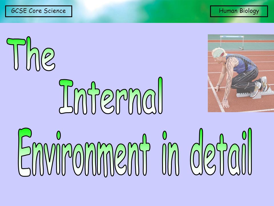 The Internal Environment in detail