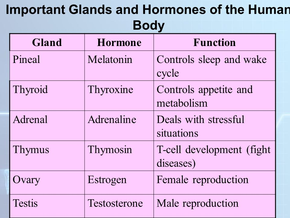 Human body systems ppt video online download important glands and hormones of the human body ccuart Choice Image