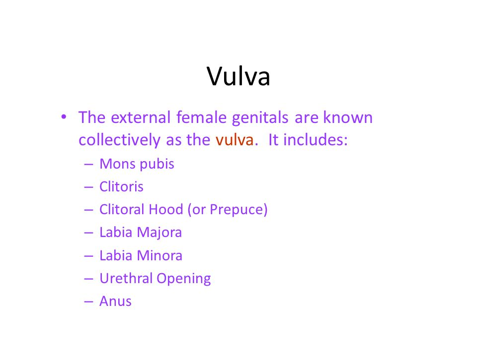 Links from Female Reproductive System – Menstrual Cycle, External ...