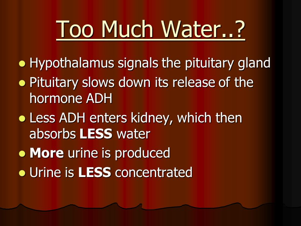 Too Much Water.. Hypothalamus signals the pituitary gland