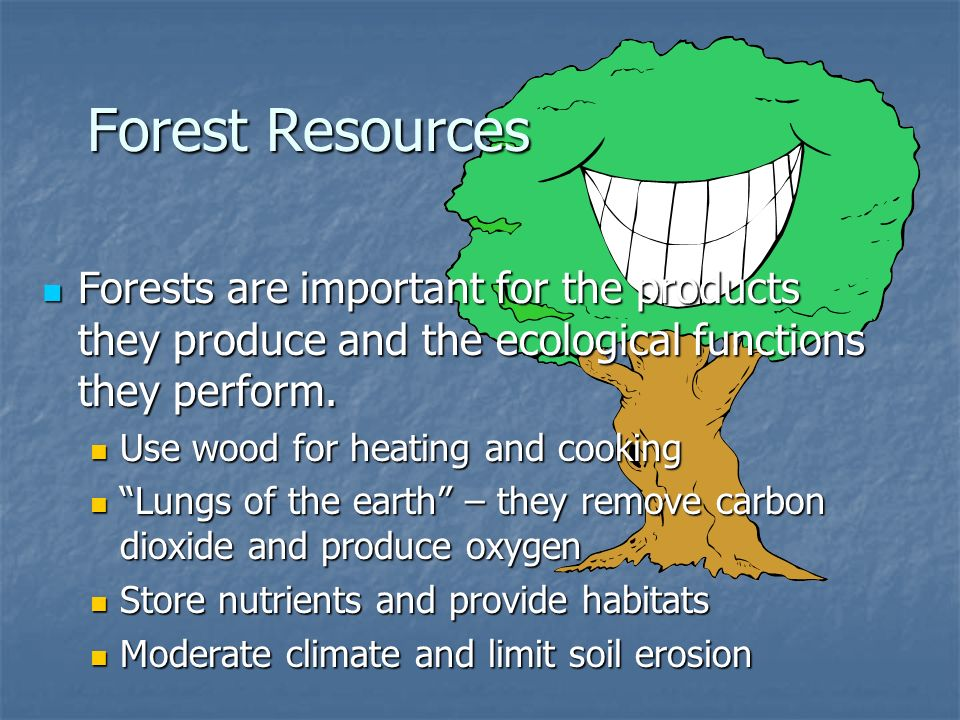 Forest Resources Forests are important for the products they produce and the ecological functions they perform.