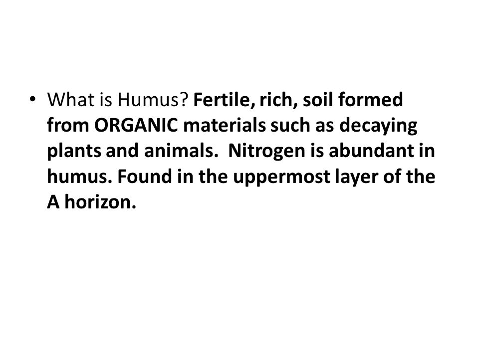 What is Humus.