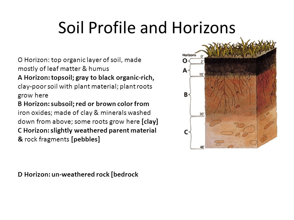 Soil Profile and Horizons