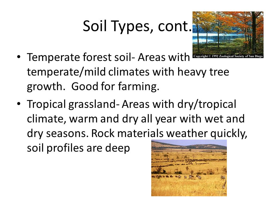 Soil Types, cont. Temperate forest soil- Areas with temperate/mild climates with heavy tree growth. Good for farming.