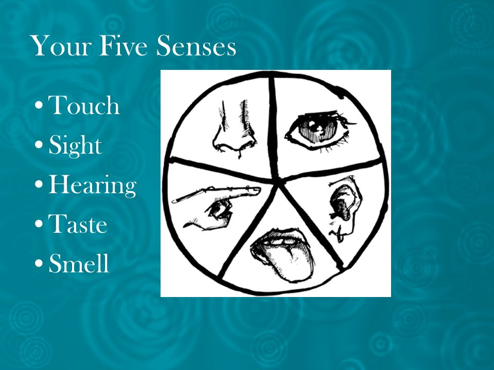 Your Five Senses Touch Sight Hearing Taste Smell