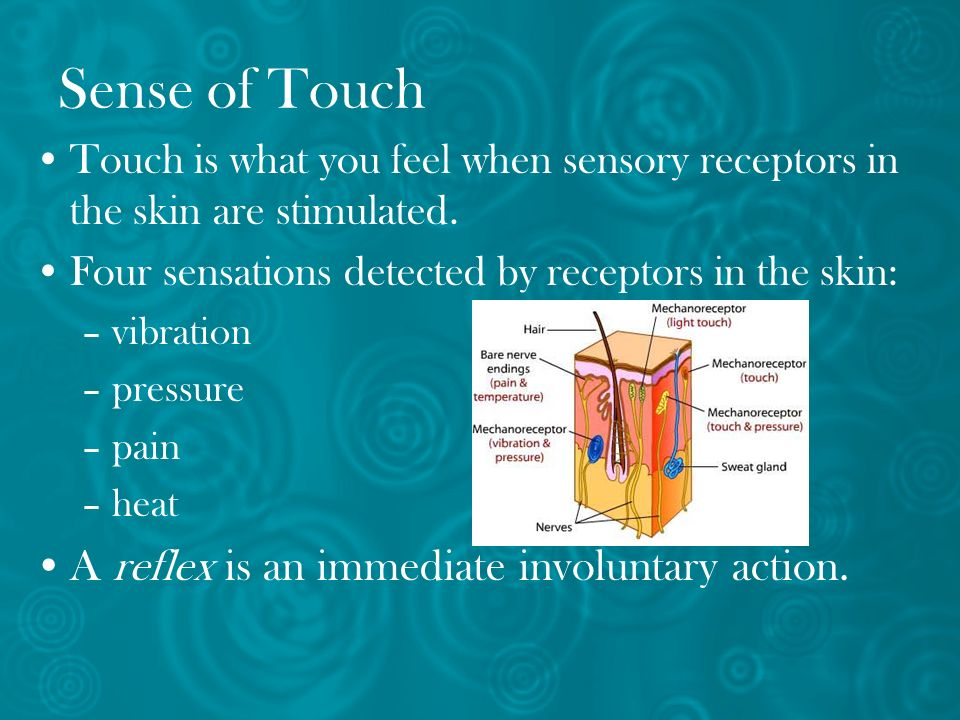 Sense of Touch A reflex is an immediate involuntary action.