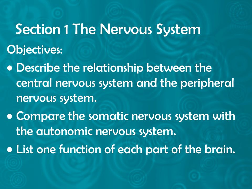 Section 1 The Nervous System