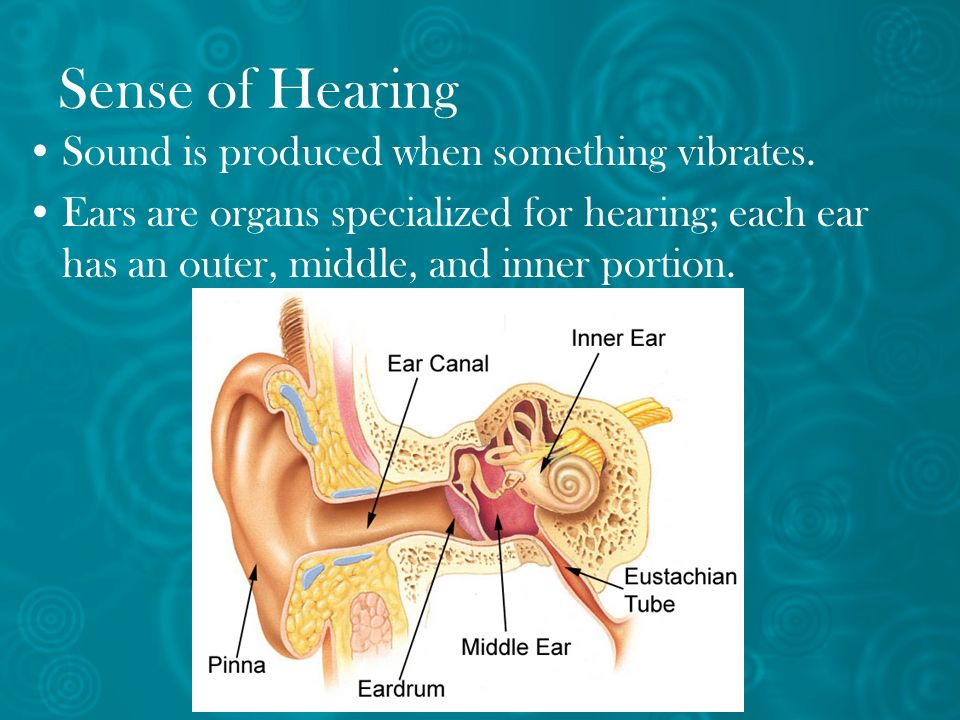 Sense of Hearing Sound is produced when something vibrates.