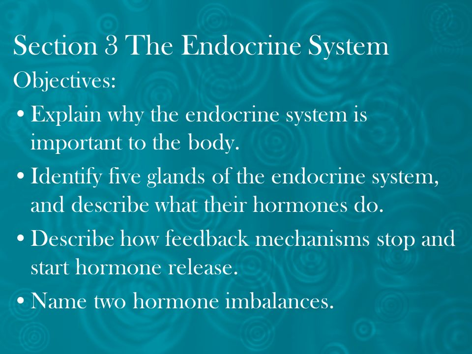 Section 3 The Endocrine System