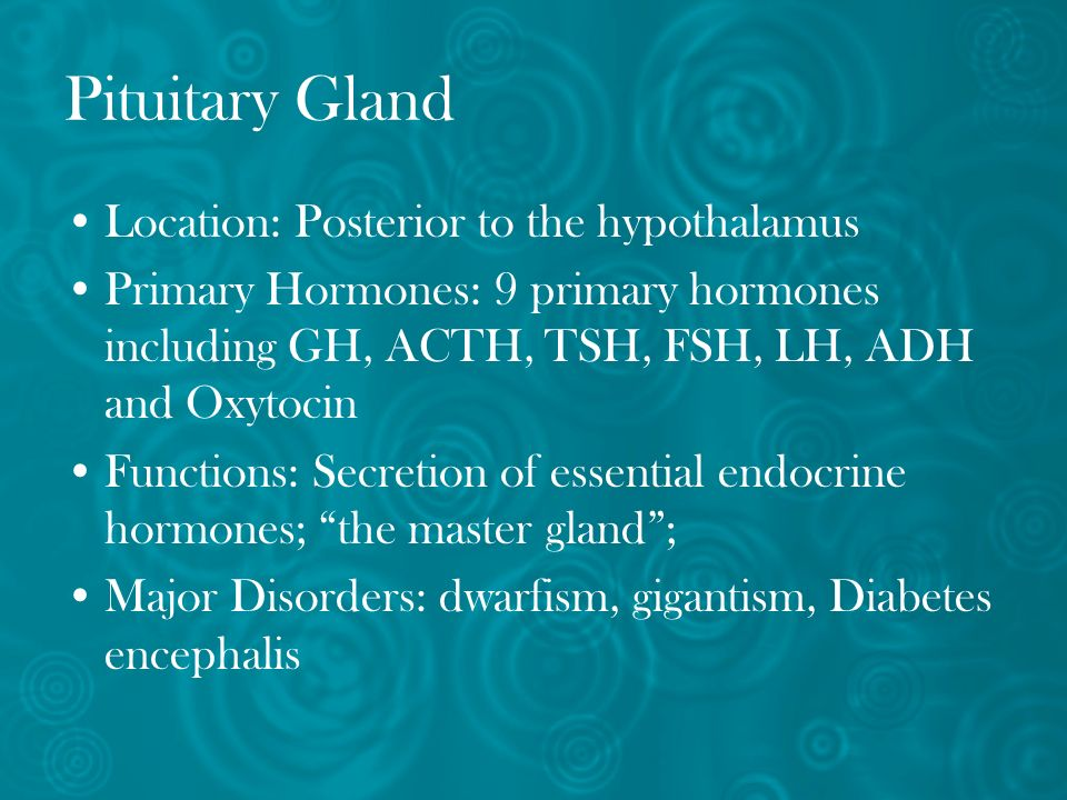 Pituitary Gland Location: Posterior to the hypothalamus