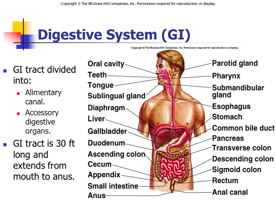 Chapter 18 The Digestive System Ppt Video Online Download