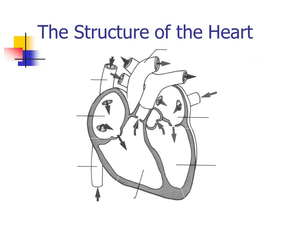 Heart diagram gcse blank wiring diagram gcse physical education ppt download rh slideplayer com heart diagram biology gcse blood vessels diagram gcse ccuart Image collections