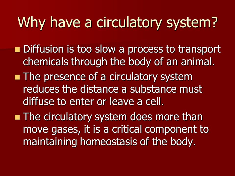 Why have a circulatory system
