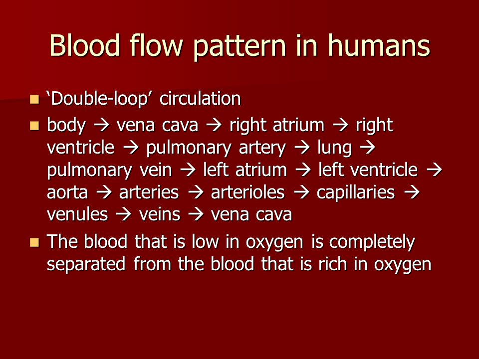 Blood flow pattern in humans